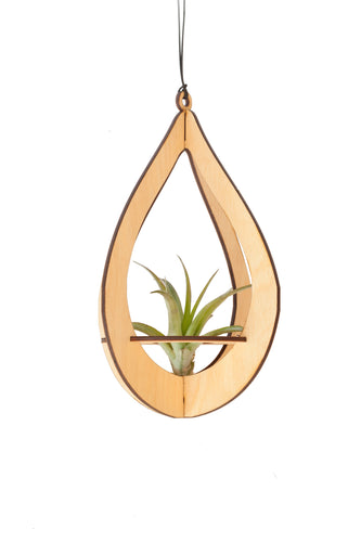 air plant hanger >> teardrop >> maple