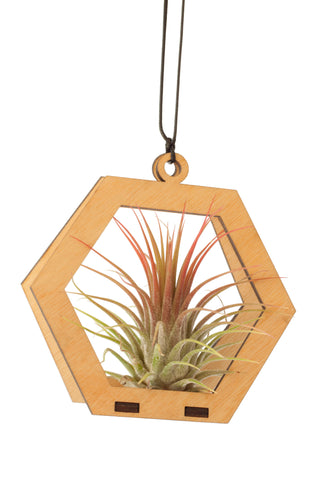air plant ornament >> hexagon >> maple