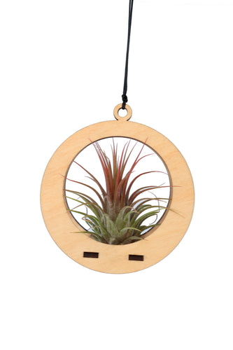 air plant ornament >> circle >> maple