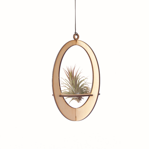 air plant hanger >> oval >> maple