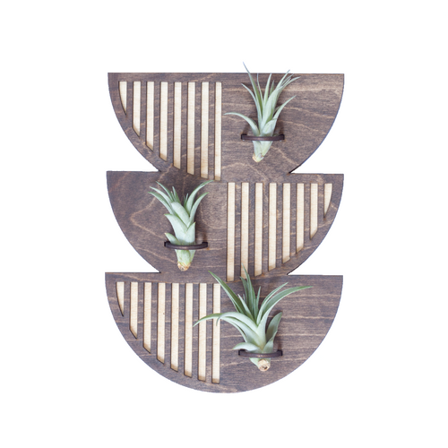 Wood Cut Air Plant Wall Hanger - Trio Single Sunrise