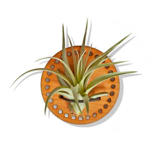 Cherry Wood Air Plant Magnet - Circle