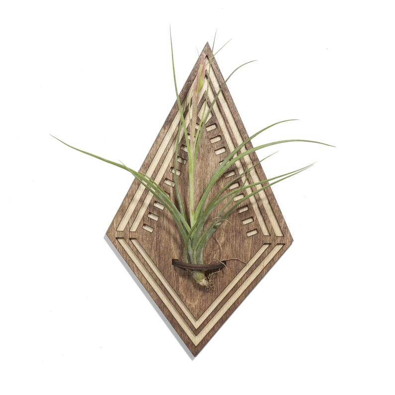 Wood Cut Air Plant Wall Hanger - Diamond