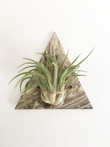 air plant magnet >> marbled wood >> laser cut triangle design >> plant included