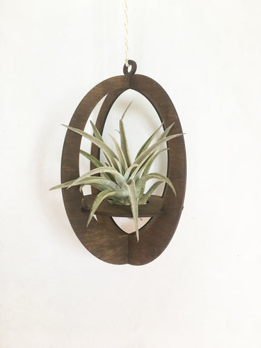air plant hanger >> oval >> walnut