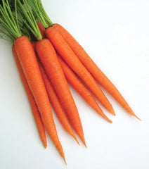 CARROT cardstock color is similar to the color of this bunch of carrots