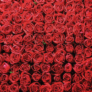 Red Roses 12x12 patterned paper from American Crafts