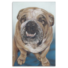Image of Bull Dog - Canvas (4 Sizes) - Nana The Noodle