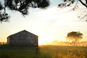 The sun sets behind an old rustic barn