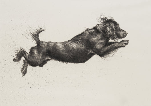 Cocker Leaping-Fine Art Print By Catherine Ingleby.Equine Canine Art.. Equine Canine Art is an online sales platform for horse art and dog art.