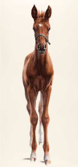 Curiosity-Fine Art painting By Claire Verity/Equine Canine Art (Foal).. Equine Canine Art is an online sales platform for horse art and dog art.