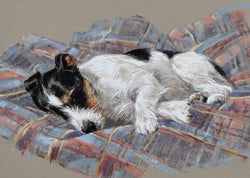 Short Snooze-Giclee Print By Claire Verity/Canine Art/Terrier/Dog///. Equine Canine Art is an online sales platform for horse art and dog art.