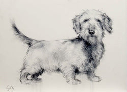 Dachshund Sketch-Fine Art By Catherine Ingleby-Equine Canine Art/dog. Equine Canine Art is an online sales platform for horse art and dog art.