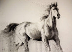 High Spirits...Fine Art Sketch By Catherine Ingleby/Equine Art-Horse..Equine Canine Art is an online sales platform for horse art and dog art.