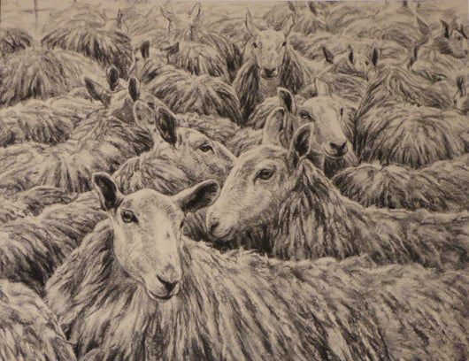 Wooly Ruminations-By Claire Verity/Equine Canine Art/Sheep/Flock/. Equine Canine Art is an online sales platform for horse art and dog art.
