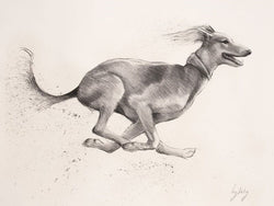 Saluki-Fine Art Sketch By Catherine Ingleby/Canine Art/Dog(Painting).. Equine Canine Art is an online sales platform for horse art and dog art.