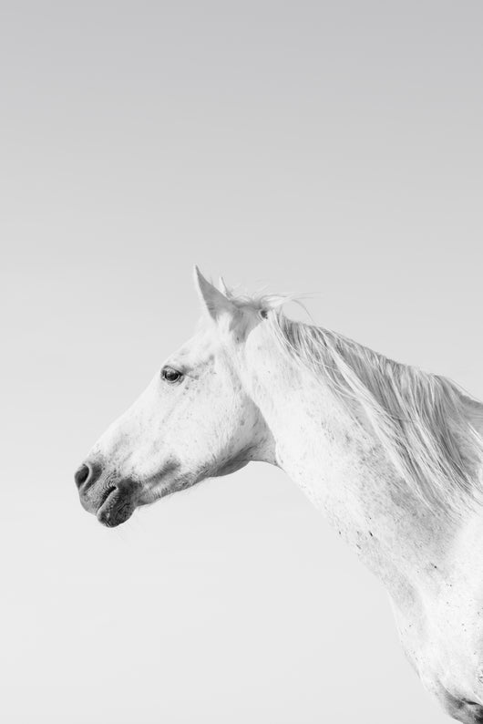 Sentry-Photgrphy Print By Carys Jones/Equine Art/(Equine Canine Art).. Equine Canine Art is an online sales platform for horse art and dog art.