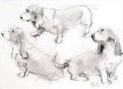 Basset Head Trio Fine Art Sketch By Catherine Ingleby/Canine art/Dogs.Equine Canine Art is an online sales platform for horse, dog art
