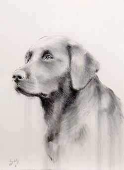Black Lab Head Fine Art Sketch By Catherine Ingleby/Canine Art/Gun dog. Equine Canine Art is an online sales platform for horse, dog art