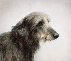 Soulful Eyes-Giclee Print By Claire Verity/Canine Art/Deerhound(dog) Equine Canine Art is an online sales platform for horse art and dog art.