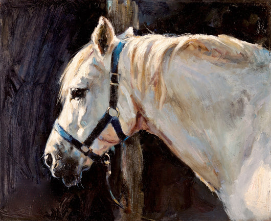 Study In Sunlight-Giclee Print By Claire Verity/Equine Art/Horse Art.. Equine Canine Art is an online sales platform for horse art and dog art.