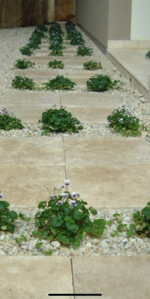 travertine classico  psvers 400x400x30