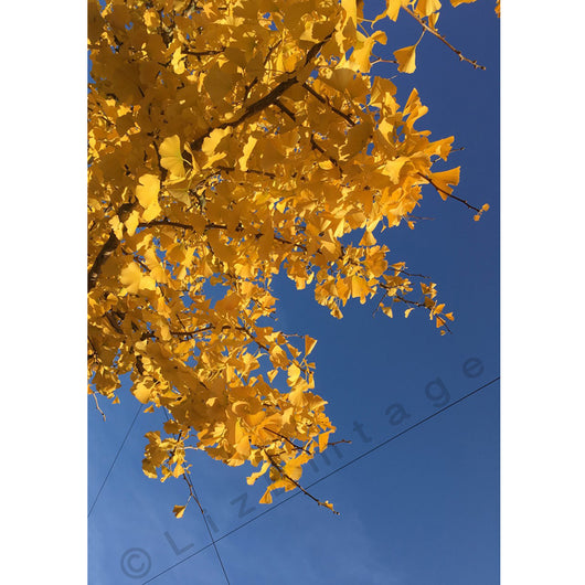 'Autumnal Gingko' gift card