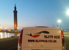 Grimsby based Elite Koi - Grimsby Dock Tower