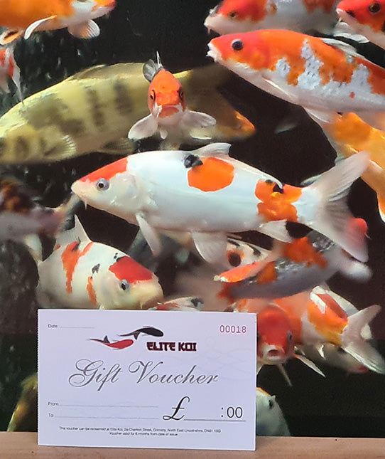 Gift Ideas for Koi Keepers