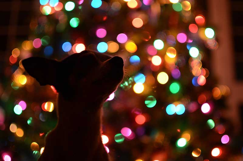 2019 Holidays: Pet Safety