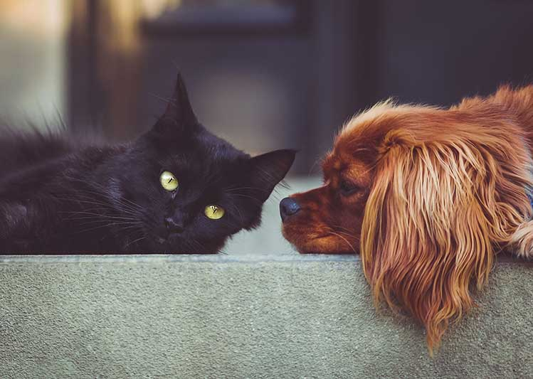 Settle It: Dogs Or Cats?
