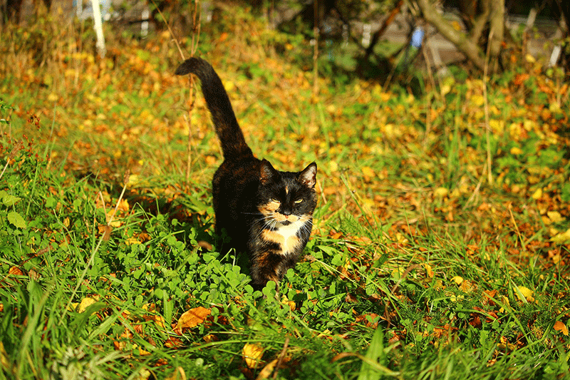 Fall Cat Care Tips