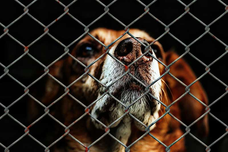 U.S. Dog Euthanization