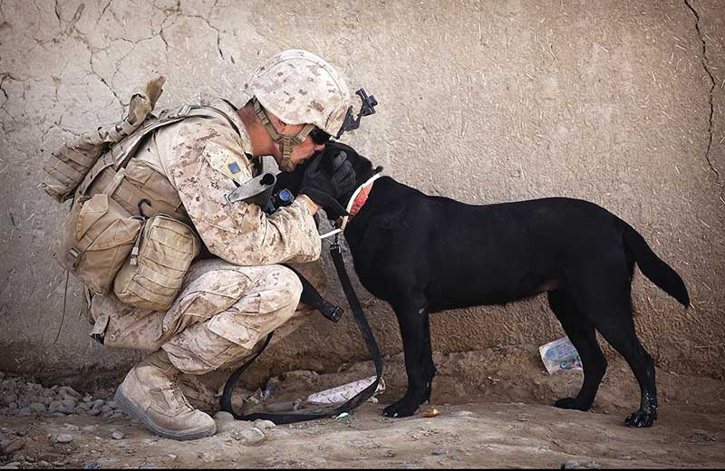 Facts About Military Dogs