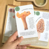 Mushroom Identification Card Set