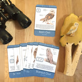Owl Identification Card Set