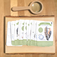 Woodpecker Exploration Card Set