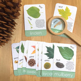 Leaf Exploration Card Set