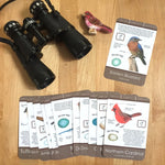 North American Bird Identification Card Set