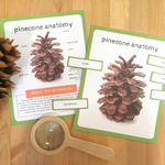 Pinecone Anatomy Poster Pack