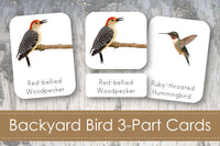 Backyard Bird 3-Part Cards