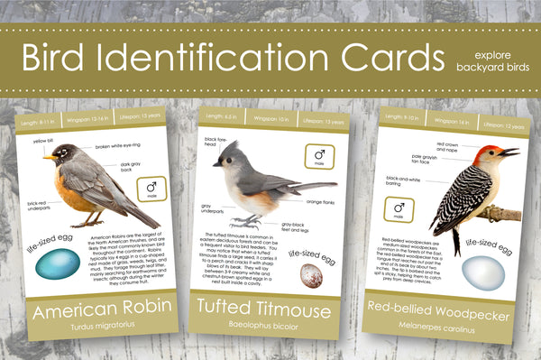 Backyard Bird Identification Cards