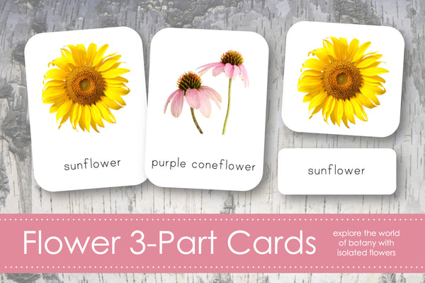 Flower 3-Part Cards