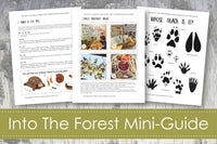 In the Forest Curriculum