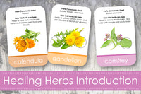 Healing Plants Identification Cards