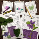 Common Blue Violet Plant Study