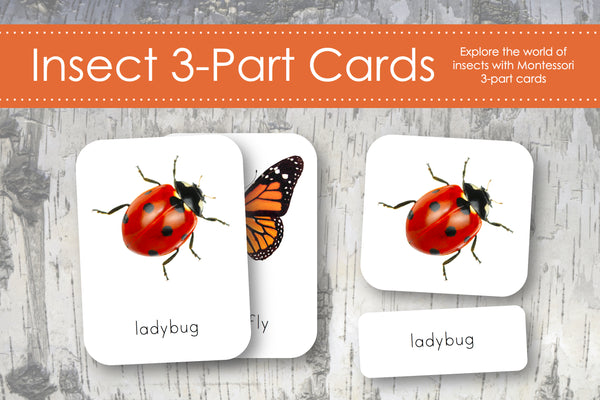 Insect 3-Part Cards
