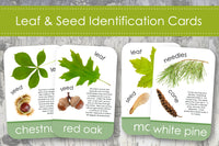 Leaf & Seed Identification Cards