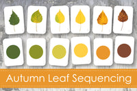 Autumn Leaf Sequencing