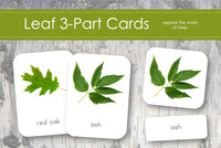 Leaves 3-Part Cards